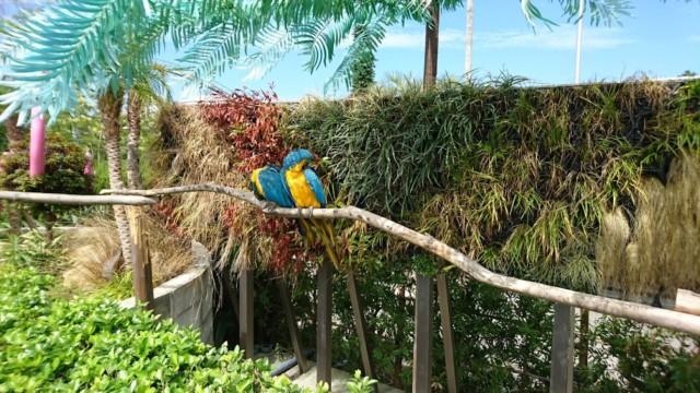アドベンチャーワールド 鳥