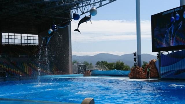 アドベンチャーワールド イルカのジャンプ