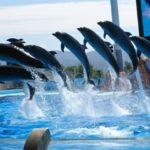 アドベンチャーワールドの楽しみ方|パンダを見に徳島から車でアクセス