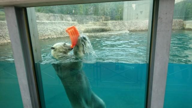 とくしま動物園 ポロロ