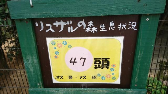 リスザルの数 とくしま動物園