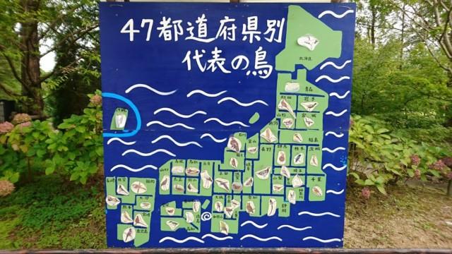 47都道府県の代表の鳥