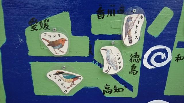 四国 代表 鳥