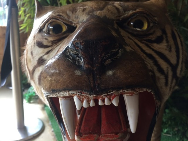 虎のはく製