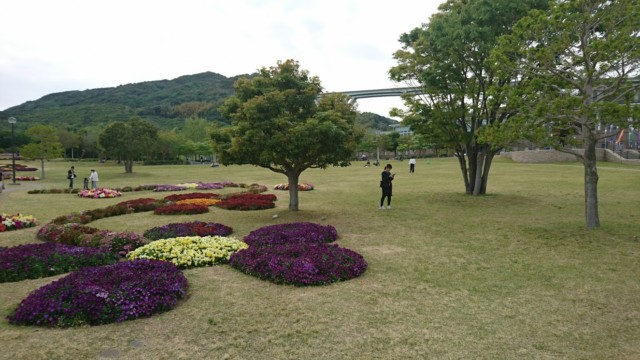 国営明石海峡公園 花